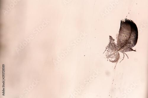 Foto auf Gartenposter Schmetterlinge im Grunge Feathers on the web