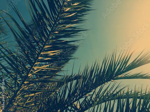 lisci-palmy-i-niebo-lato-tlo-podrozy