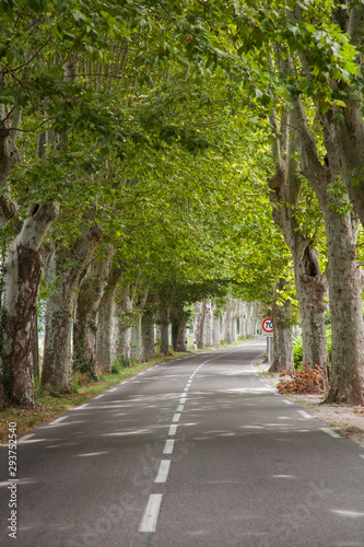 Foto Road with avenue trees near the city of Apt, Vaucluse, Provence-Alpes-Cote d Azu