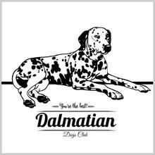 Dalmatian Dog - Vector Illustr...