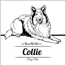 Collie Dog - Vector Illustrati...