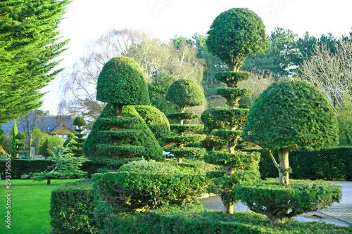 Fototapeta topiary yew and buxus trees