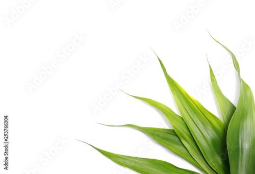 Vászonkép nature green leaves on white background
