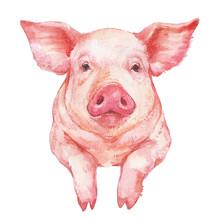 Cute Pink Pig Portrait Waterco...
