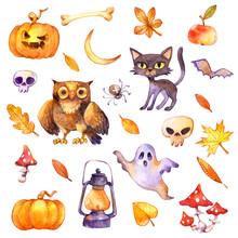 Skull, Pumpkin Lantern, Black ...
