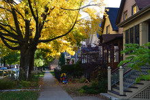 Fall Colors In A Residential Neighborhood Of Chicago