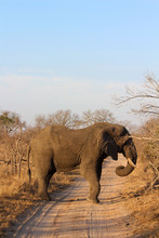 Amazing South African Safari - Hippos, Monkeys, Zebras, Leopards, Lions, Painted Wolves, Elephants, Giraffes, Hyenas, Wildlife - Nature At It's Finest