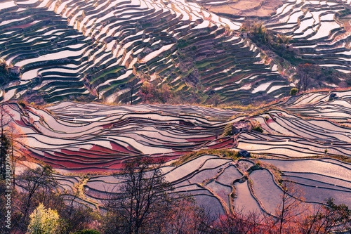 Photo sur Toile Les champs de riz Terraced rice fields of YuanYang , China in the morning