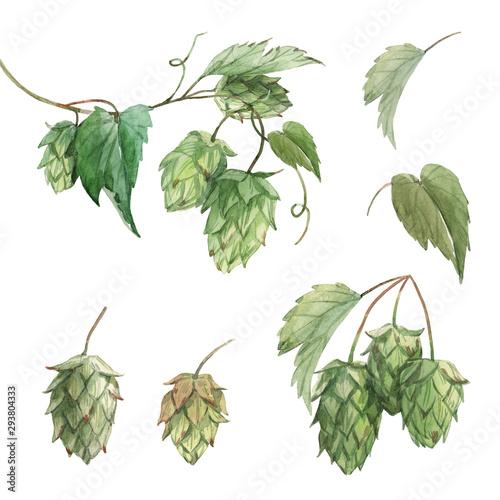 Watercolor hop flowers illustration set