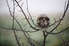 A Human Skull In The Fog Is Wo...