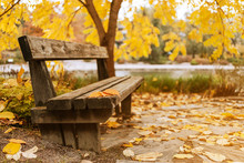 Wooden Bench With Leaves In A ...