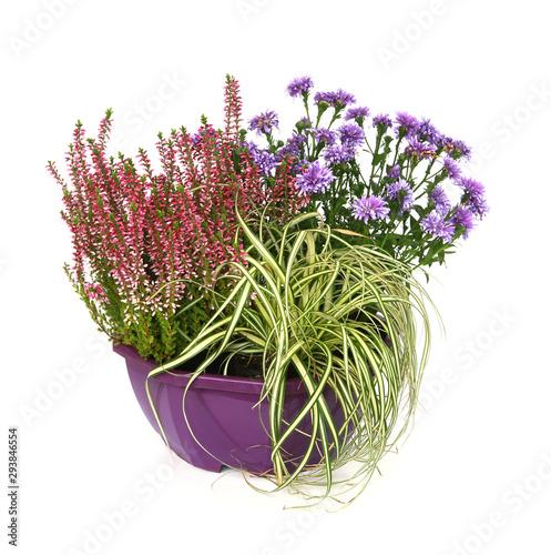 Composition de plantes d'automne