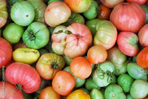 Fotografie, Obraz Different tomatoes mutants
