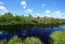 Freshwater Habitat - Everglade...