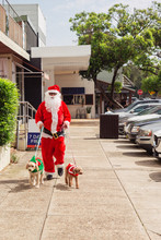 Santa Out Walking His Dogs