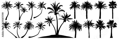 Foto Palm trees silhouette