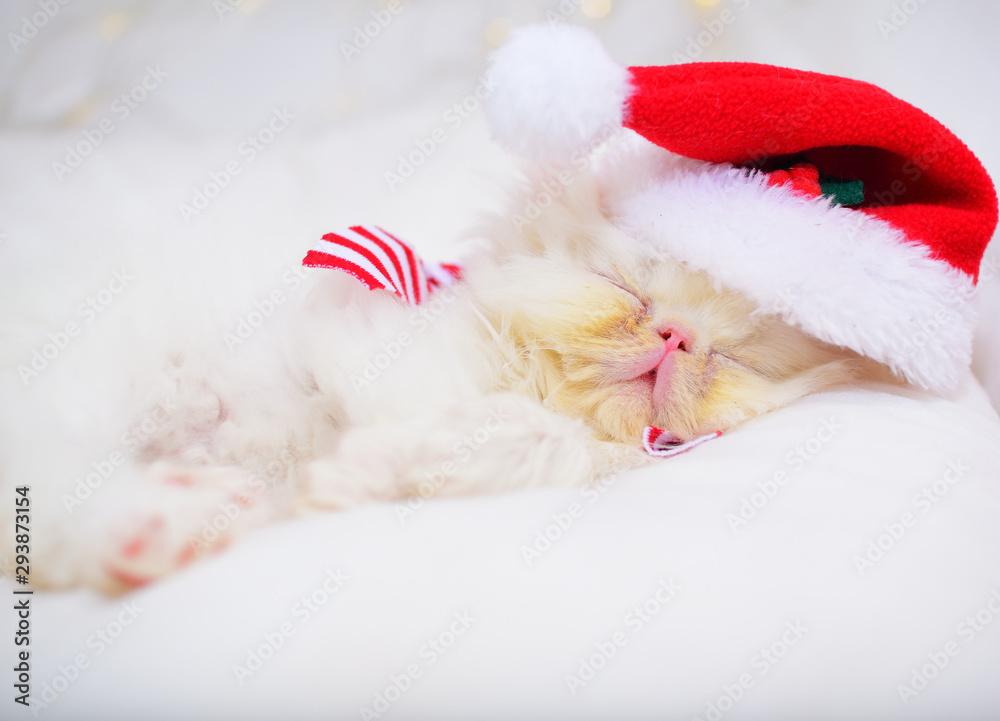 cute christmas baby kitten