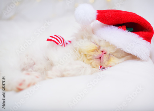 obraz PCV cute christmas baby kitten