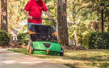 Man Using Manual Push Lawn Sweeper To Remove Fall Leaves From Residential Backyard Grass Lawn.