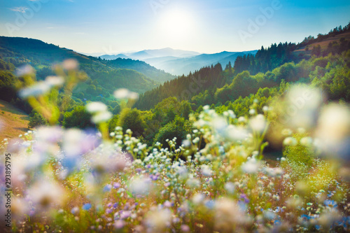 Serene flower field landscape in beautiful setting late summer towards autumn