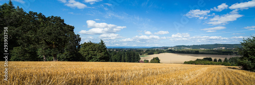 A yellow wheat field with a view onto a agricultural valley below.