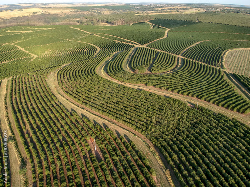 Photo  aerial viewof green coffee field in Brazil