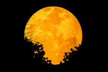 Moon With Silhouette Tree In F...