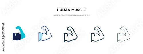 Fotografie, Tablou human muscle icon in different style vector illustration