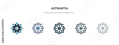 astrantia icon in different style vector illustration Wallpaper Mural