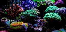 Dream Coral Reef Saltwater Aqu...