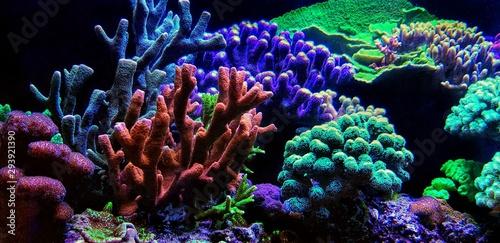 Tuinposter Koraalriffen Dream Coral reef saltwater aquarium tank scene