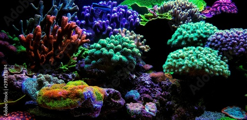 Dream Coral reef saltwater aquarium tank scene Canvas Print
