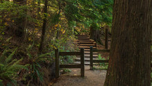 Wooden Steps Through Forest On Loop Trail At Sasamat Lake, Belcarra Provincial Park
