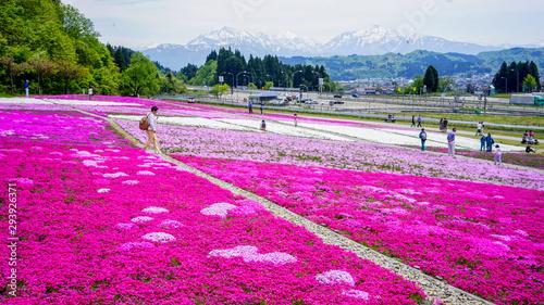 Keuken foto achterwand Roze 魚沼奥只見レクリエーション都市公園の芝桜