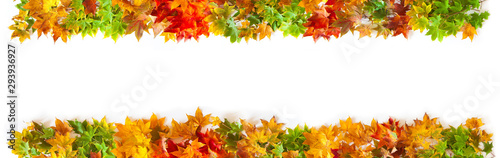 Fototapeta Autumn long background with red, yellow, orange maple leaves