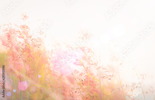 Beautiful meadow and sky autumn sunrise background фототапет