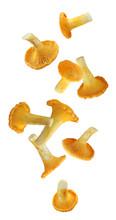 Falling Chanterelle Mushroom Isolated On White Background.
