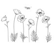 Sketch Floral Botany Collection. Poppy flower drawings. Black and white with line art on white backgrounds. Hand Drawn Botanical Illustrations.Vector.