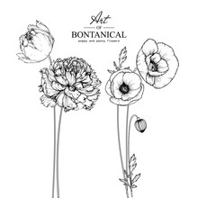 Sketch Floral Botany Collection. Poppy And Peony Flower Drawings. Black And White With Line Art On White Backgrounds. Hand Drawn Botanical Illustrations.Vector.