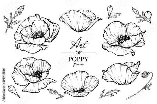 fototapeta na ścianę Sketch Floral Botany Collection. Poppy flower drawings. Black and white with line art on white backgrounds. Hand Drawn Botanical Illustrations.Vector.