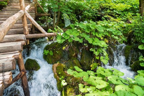 Vászonkép Pure fresh water cascades down a hill slope passing mossy rocks and plenty of bu