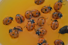 Colorful Ladybugs On White Bac...