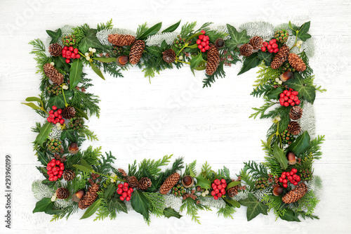 Fototapeta Natural winter and Christmas background border with holly and a variety of flora and fauna on rustic wood background with copy space. obraz