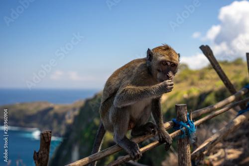 Photo  Monkey on fence