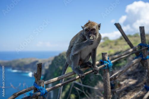 Monkey on fence Canvas Print