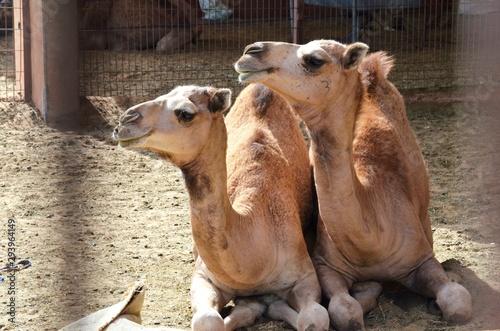 Recess Fitting Camel Wüste