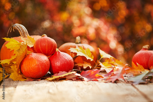 Fototapety, obrazy: Autumn nature concept. Fall pumpkins and apples on wooden rustic table. Thanksgiving dinner