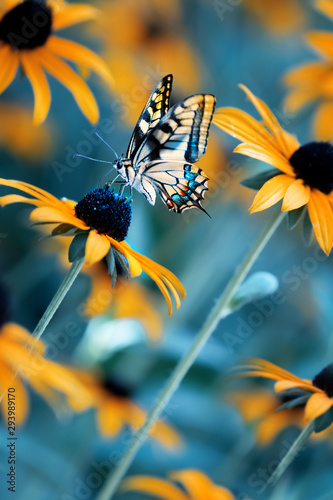 Tropical bright butterfly on an orange flower in a summer magic garden. Summer natural artistic image. - 293989170