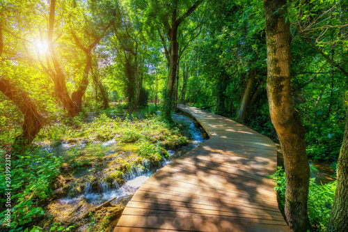 Garden Poster Road in forest Krka national park wooden pathway in the deep green forest. Colorful summer scene of Krka National Park, Croatia, Europe. Wooden pathway trough the dense forest near Krka national park waterfalls.