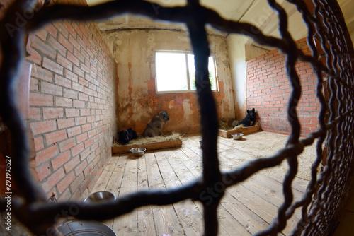Fényképezés Animal shelter